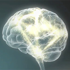 The Science of Early Brain Development
